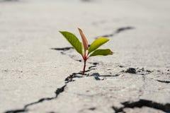 ??n groen jong zaad van boom het groeien van barsten van asfaltweg Het concept van het milieu royalty-vrije stock afbeeldingen