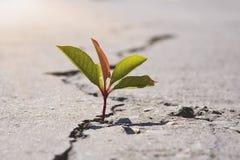??n groen jong zaad van boom het groeien van barsten van asfaltweg Het concept van het milieu stock foto's