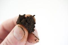 nękanie mokrawa tabaka Zdjęcie Stock