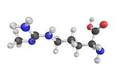 N-Methylarginine, un inhibidor del synthase del óxido nítrico Es u imagen de archivo libre de regalías