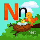 N for nest Royalty Free Stock Images