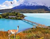 Ön och stranden förbinder lätt bron Arkivfoto