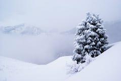 Één pijnboomboom en sneeuw Royalty-vrije Stock Foto