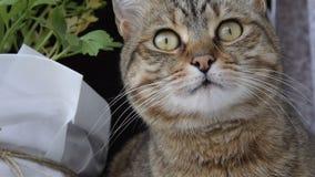 N?ra ?vre sikt av den nyfikna katten lager videofilmer