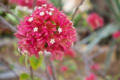 N?ra ?vre sikt av h?rliga blommor i en tr?dg?rd - Bild arkivfoto