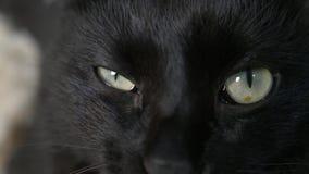 N?rbild 4k, gr?na ?gon av en svart katt lager videofilmer
