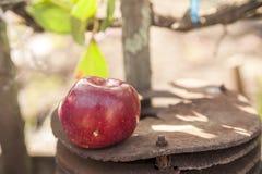 ??n rood appel dichte omhooggaande en exemplaarruimte op de achtergrond van een roestige lijst Een lelijke appel met verrotting royalty-vrije stock foto's