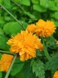 N?tt blommor royaltyfri bild