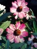 N?tt blommor arkivbild