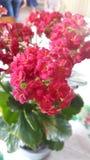 n?tt red f?r blomma royaltyfria foton