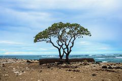 ??n van de mooiste en hoogst geschatte stranden in de wereld - Wailea-Strand, Maui, Hawa?, de V.S. royalty-vrije stock foto's