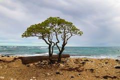 ??n van de mooiste en hoogst geschatte stranden in de wereld - Wailea-Strand, Maui, Hawa?, de V.S. stock afbeelding