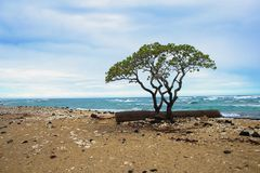 ??n van de mooiste en hoogst geschatte stranden in de wereld - Wailea-Strand, Maui, Hawa?, de V.S. royalty-vrije stock afbeelding