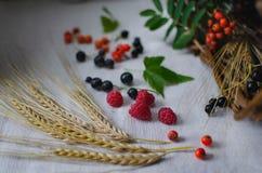 A?n vida r?stica Oídos de las bayas del trigo, de las frambuesas, del serbal y de la grosella negra en un mantel de lino fotografía de archivo