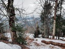 Mountain view in Carpathians, Bukovel ski resort, Ukraine. N view carpathians bukovel ski resort ukraine forest travel landscape scenery pine snow sky tree royalty free stock photo