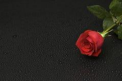 Naßmachen Sie Rosen-Serie hen Stockbild