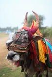 na Índia Fotos de Stock Royalty Free