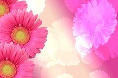 Na abstrakcjonistycznym tle Gerber kwiat Zdjęcia Royalty Free