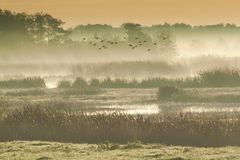Na bagnach ranek mgła Obraz Royalty Free