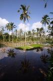 Na Bali tarasowi ryżowi pola, Indonezja Fotografia Stock