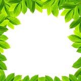 Na biały tle zieleń liść Zdjęcia Royalty Free