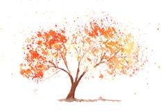Na biel jesień drzewo Obrazy Stock