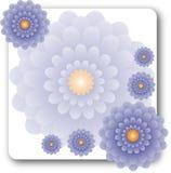 Na biel lawendowi kwiaty Zdjęcia Royalty Free