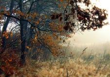 Na borda da floresta Imagens de Stock Royalty Free