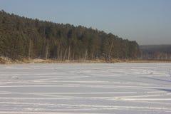 Na borda da floresta do pinho Imagem de Stock