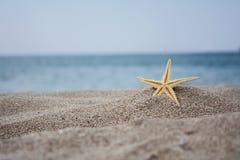 Na brzeg błękit morze kłama rozgwiazdy Obraz Stock
