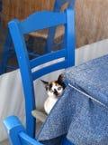 Na cadeira azul Fotos de Stock Royalty Free