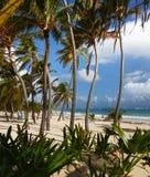 Na Caribbean plaży wysokie palmy Obrazy Stock
