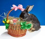 Na cesta com os ovos da páscoa que tentam escalar o coelho curioso Imagem de Stock