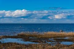 Na costa do Golfo da Finlândia na mola adiantada em um dia ensolarado claro Mola na baía Costa sul do Golfo da Finlândia imagem de stock