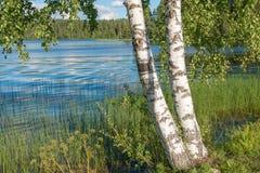 Na costa do lago Imagens de Stock Royalty Free