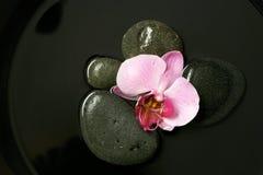 Na czarny kamieniach różowa orchidea Fotografia Royalty Free