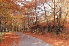 Na Czerwonej Złotej jesieni Bałkańskiej góry drogowym skrzyżowaniu, Bułgaria Zdjęcia Stock