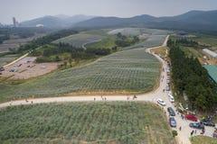 Na Czerwu 9, 2018, w Xuancheng, prowincja anhui czarnych jagod drewna zakrywający z gazą wydawali się zakrywający z warstwą odzie Obrazy Stock