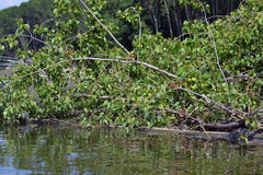 Na Danube rzece 8 Zdjęcie Royalty Free