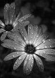 Na de Regen Stock Fotografie