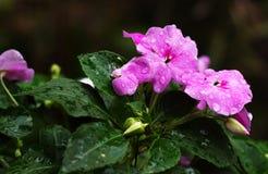 Na de regen Stock Foto's