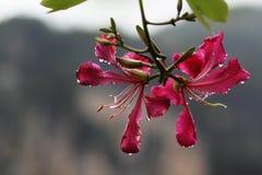 Na de regen van bloemen Stock Foto's