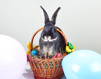 Na decoração da cesta da Páscoa os balões estão sentando o coelho Foto de Stock Royalty Free