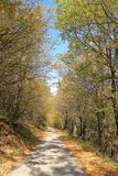 Na drodze przez Złotego jesień lasu, portret, Bałkańska góra, Bułgaria Fotografia Stock