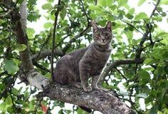 Сat na drzewie. Obrazy Stock