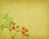 Na drzewie pawi kwiaty Zdjęcia Stock
