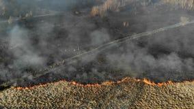 Na dużą skalę ogienie Płonąca trawa i drzewa w ogromnym obrzarze Grupa strażacy ocenia sytuację przy sceną zdjęcie wideo