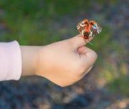 Na dziecka ` s ręki motylu Obrazy Royalty Free