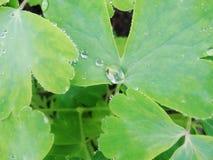 Na een de zomerregen de macrofoto van water laat vallen dauw op de stammen en de bladeren van groene installaties Stock Foto