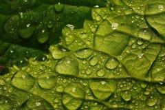 Na een de zomerregen macrofoto van waterdalingen (dauw) op de stammen en de bladeren van groene installaties stock afbeeldingen